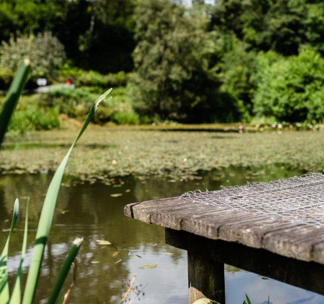 Fishing Pool